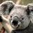 Wombat Ulanas