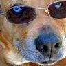 thetechdog
